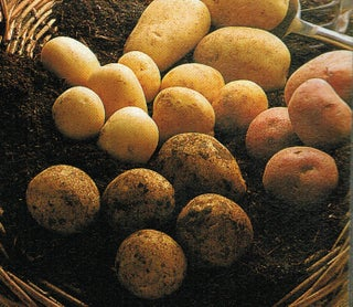 Potatoes - all about